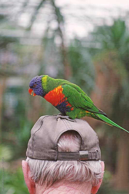 Lorikeet parrot on a man's head by Marcel for Stocksy United