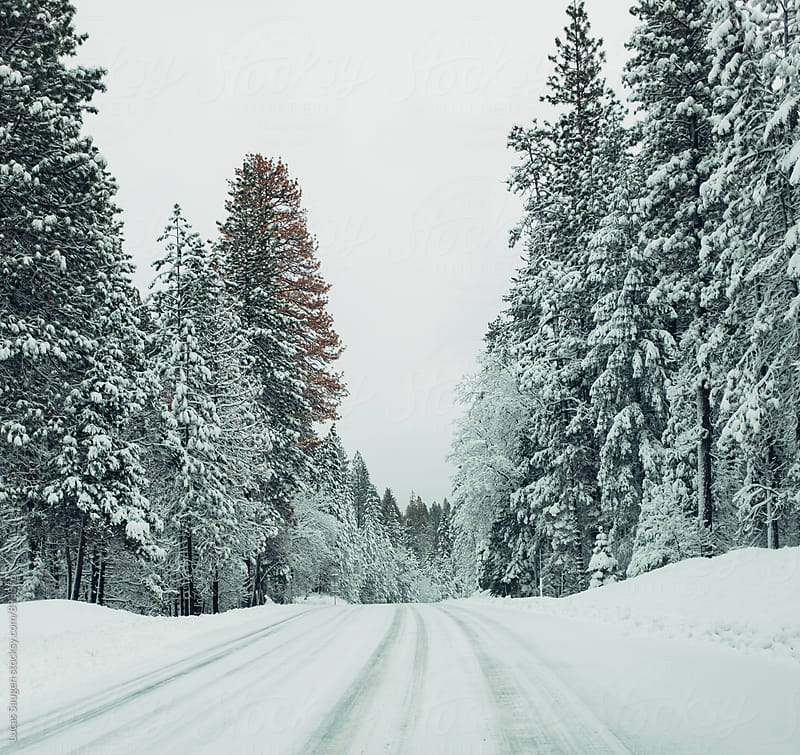 A very snowy road in the pine trees. by Lucas Saugen for Stocksy United