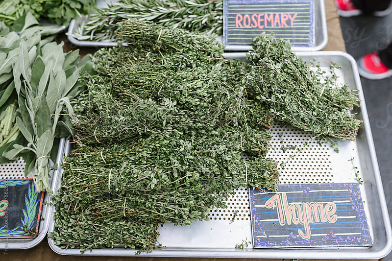 Farmers Market assortment of bunches of fresh rosemary and thyme by Trent Lanz for Stocksy United