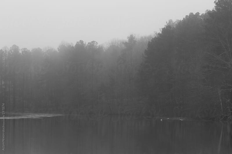 Foggy tree lined lake by Adam Nixon for Stocksy United