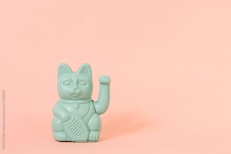 Chinese cat by CACTUS Blai Baules for Stocksy United
