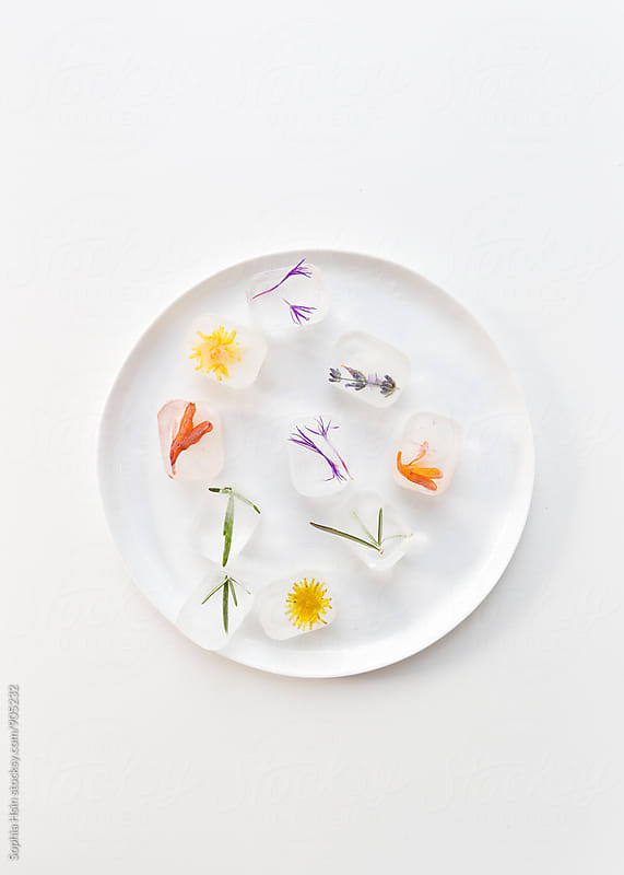 frozen flower ice cubes on white plate by Sophia Hsin for Stocksy United