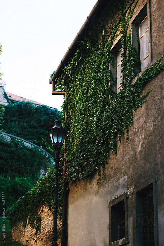 Street lamp by Jovana Rikalo for Stocksy United