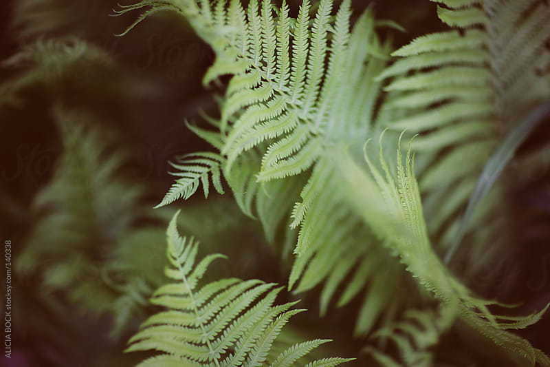 Fern Leaves #1 by ALICIA BOCK for Stocksy United