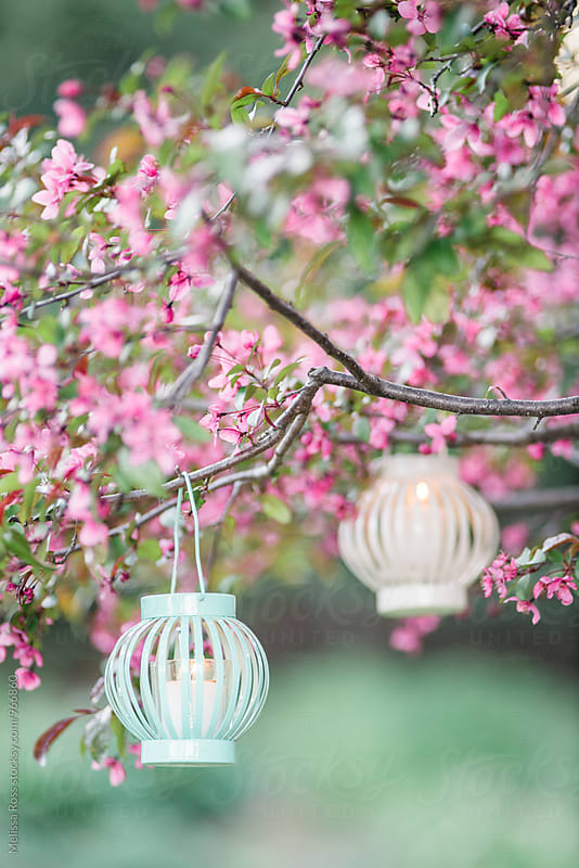Two lanterns hanging from a tree. by Melissa Ross for Stocksy United