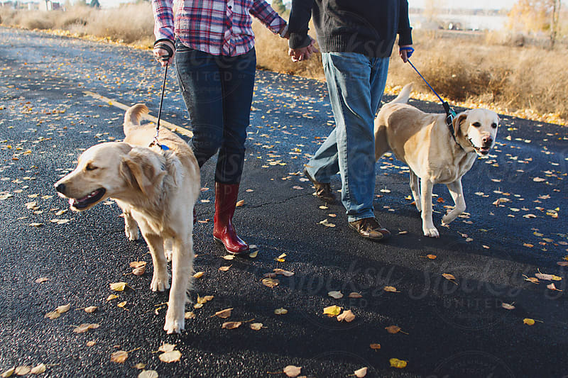 Dogs on leashes walk with owners by Tana Teel for Stocksy United