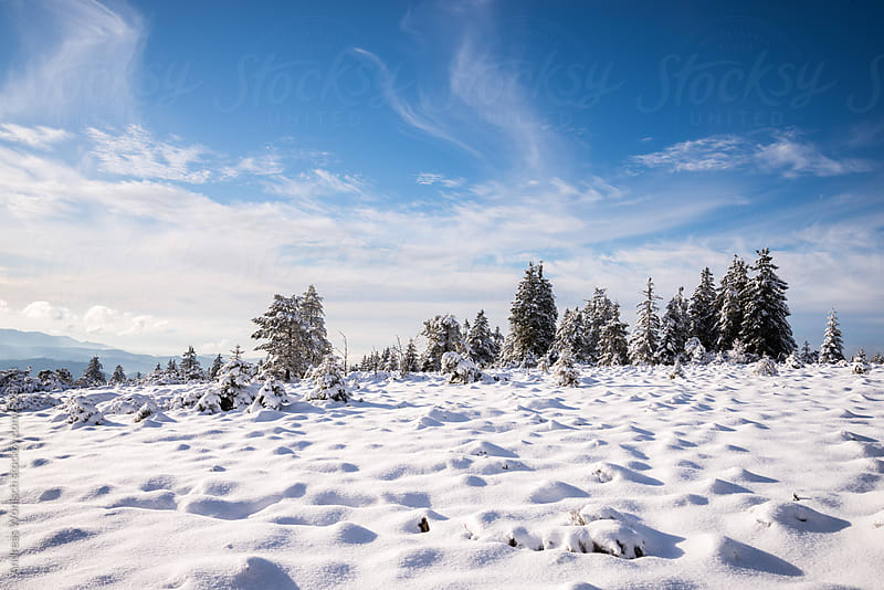 Trees in Snow Covered Winter Landscape in the German Black Forest by Andreas Wonisch for Stocksy United