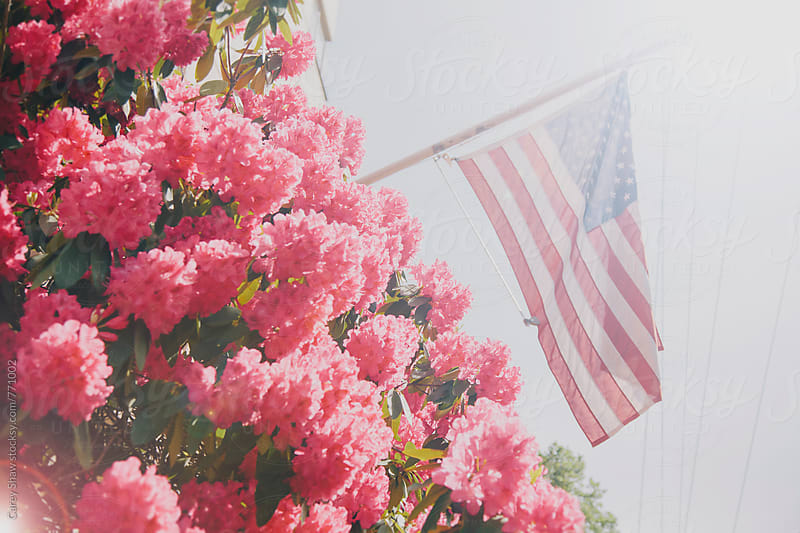 Sunlit flowers and American flag by Carey Shaw for Stocksy United