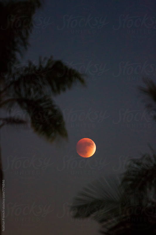 Blood Moon Between the Palms by Nathan French for Stocksy United