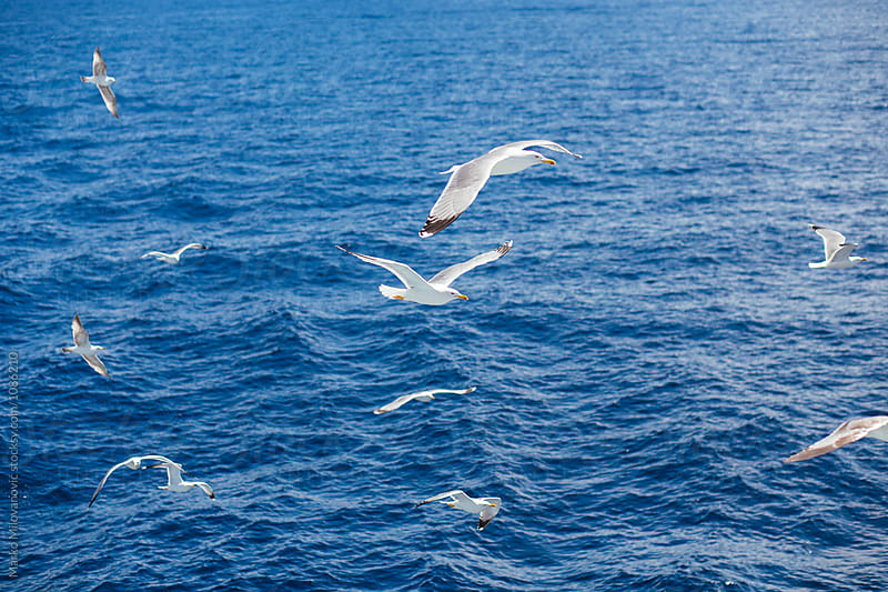 Seagulls flying near ferry boat by Marko Milovanović for Stocksy United