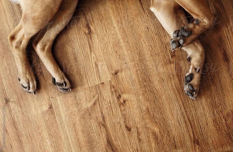 Dog Legs on Parquet by Eldad Carin for Stocksy United