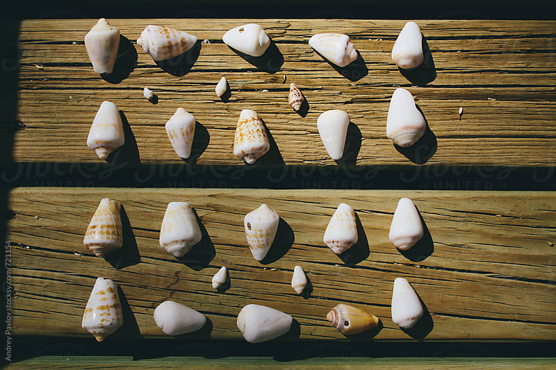 Collection of a seashells by Andrey Pavlov for Stocksy United