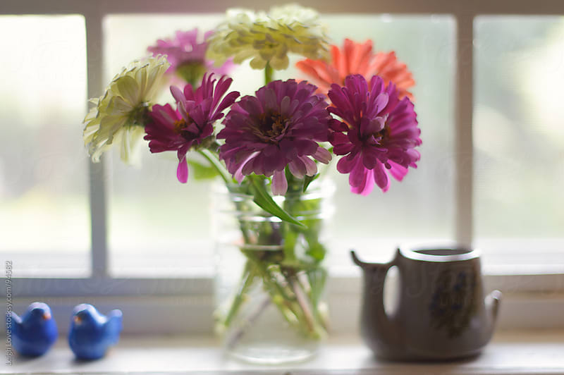 Zinnias in a Glass Vase in a Kitchen Window by Leigh Love for Stocksy United