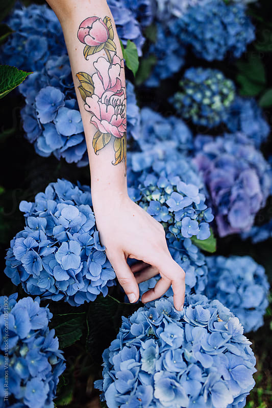 arm touching blue  hydrangeas by Thais Ramos Varela for Stocksy United