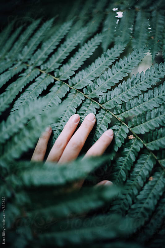 Hand touching fern by Kara Riley for Stocksy United