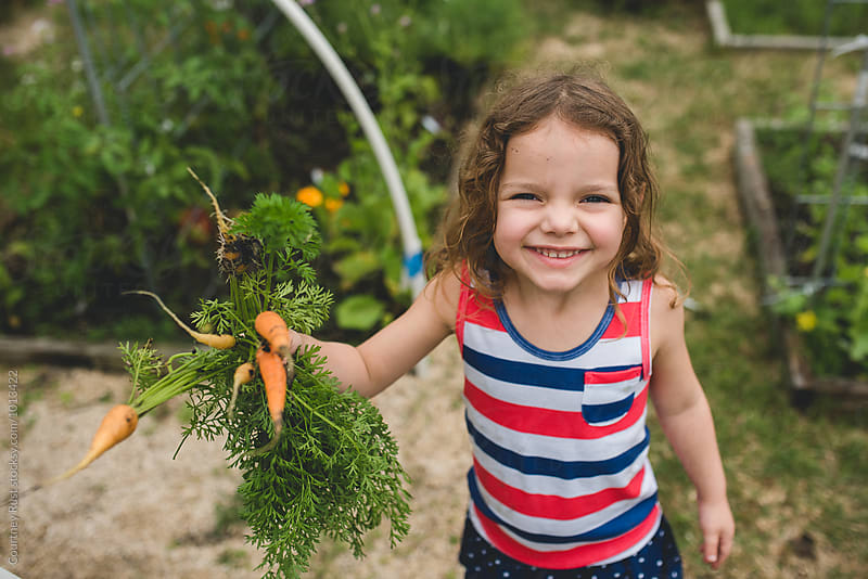 Young toddler girl picking carrots by Courtney Rust for Stocksy United