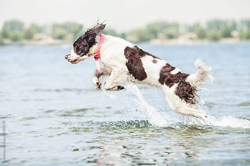 Dog Jumping Out of Water by Lumina for Stocksy United