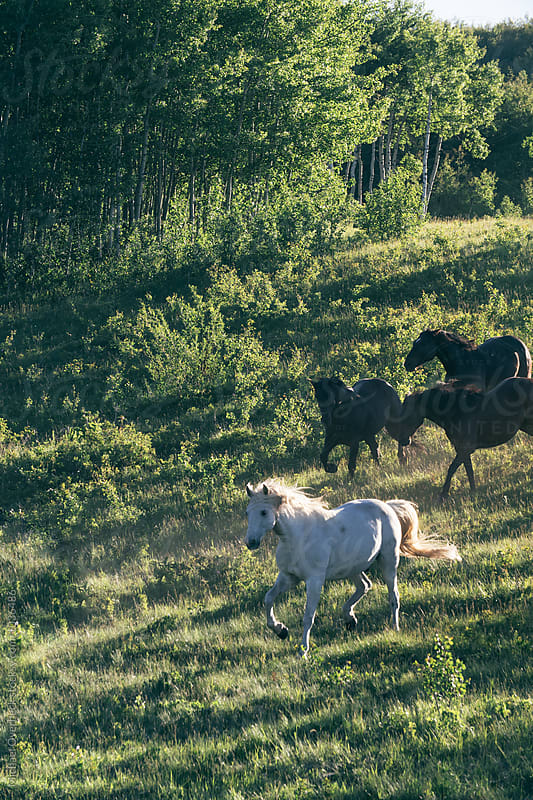 Wild Horses by Michael Overbeck for Stocksy United