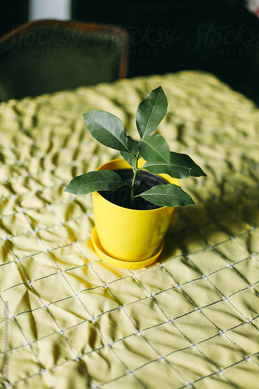 Plant in a yellow pot on a yellow table - vertical by Marija Kovac for Stocksy United