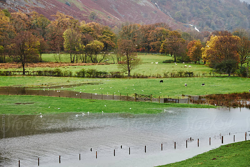 River flooding surrounding land after heavy rain storms near Patterdale. Cumbria, UK. by Liam Grant for Stocksy United