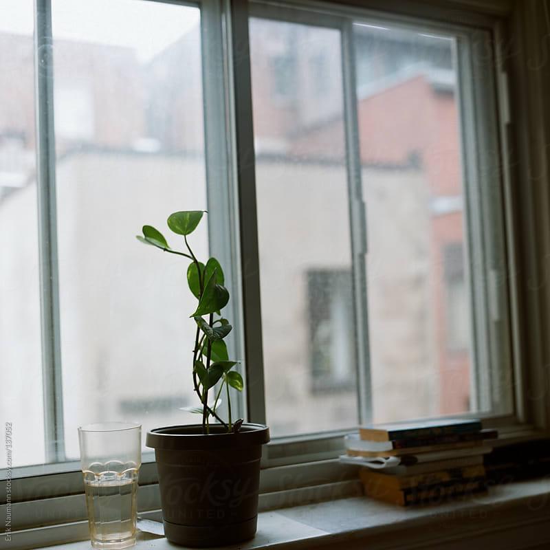 Small plant on a windowsill by Erik Naumann for Stocksy United