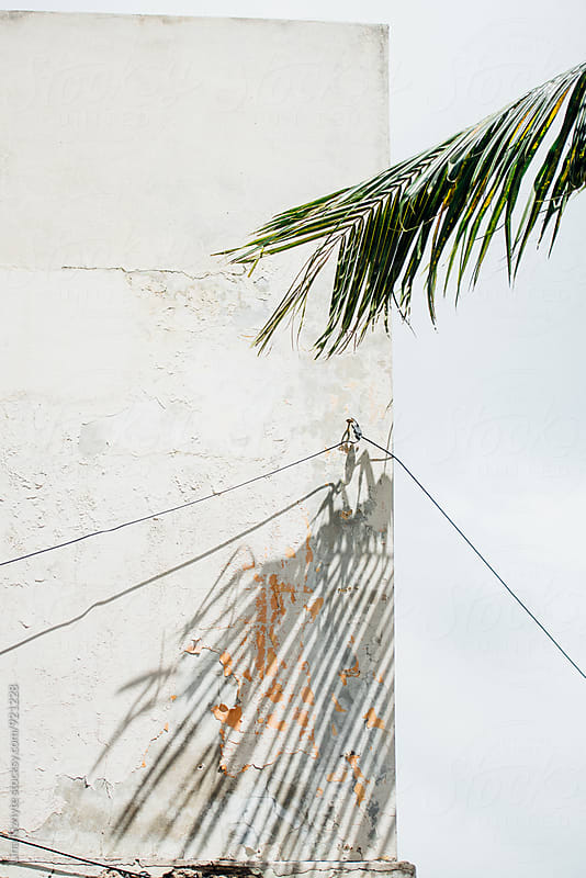Palm Tree Shadow on a building by Lina Kiznyte for Stocksy United