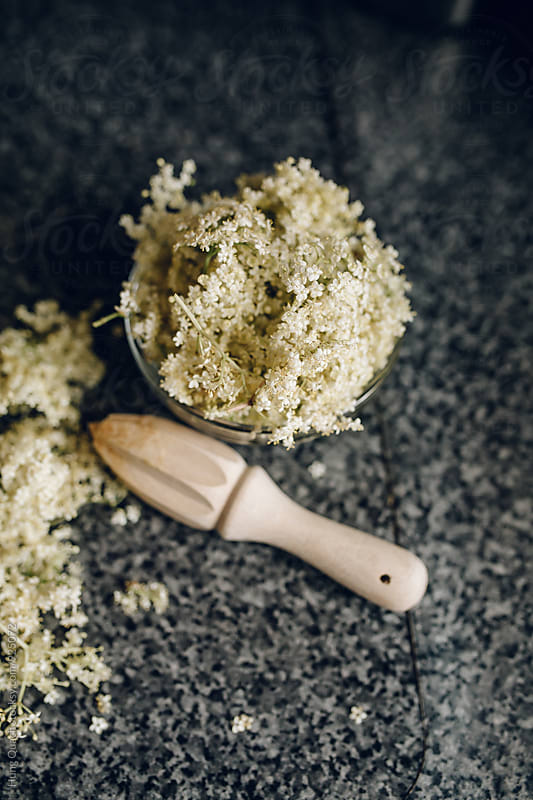 Making Elderflower Syrup by Hung Quach for Stocksy United