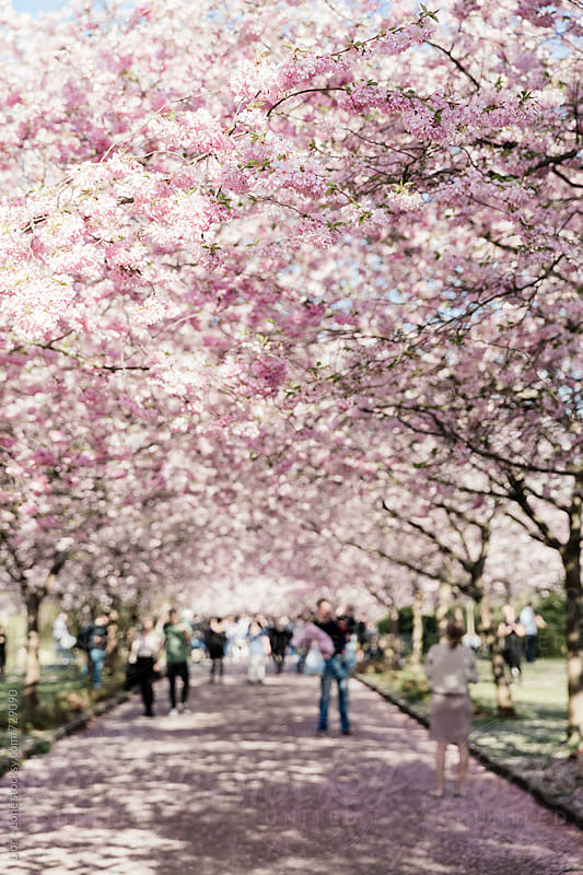 Blurry people walking on a path under cherry trees by Lior + Lone for Stocksy United