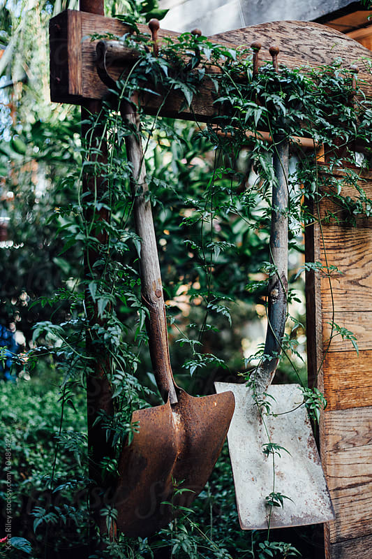 Old rusty Shovels hanging in garden by Kara Riley for Stocksy United