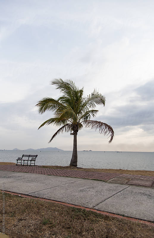 Palm tree in Panama City, Panama by Eddie Pearson for Stocksy United