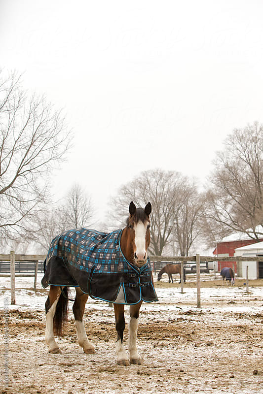 Winter Horses by aaronbelford inc for Stocksy United