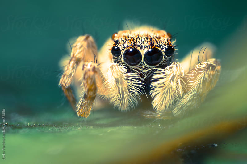 Scene of a spider on a plant by Javier Pardina for Stocksy United