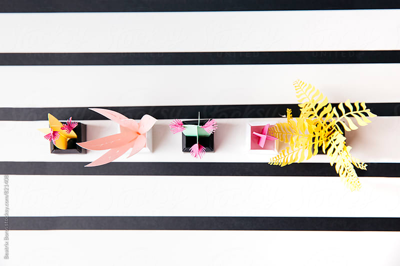 Overhead view of different plants on a black and white striped background by Beatrix Boros for Stocksy United