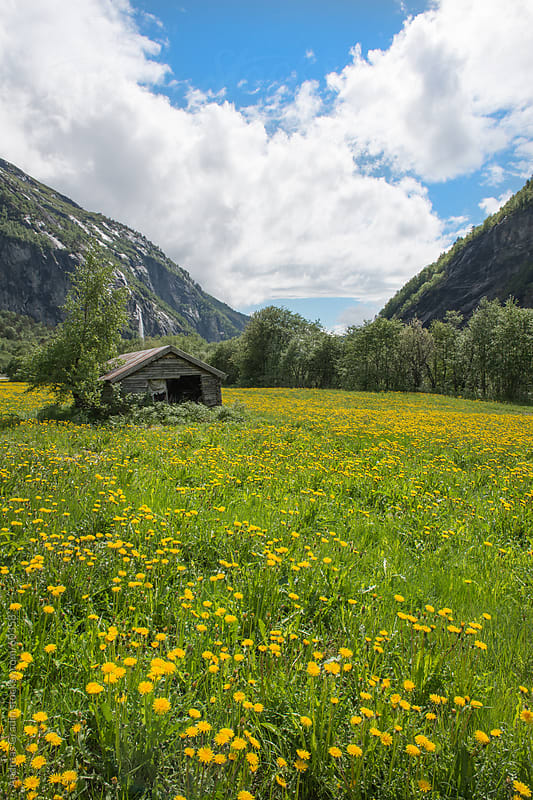 green summer field in Fjordland, Norway by Andreas Gradin for Stocksy United