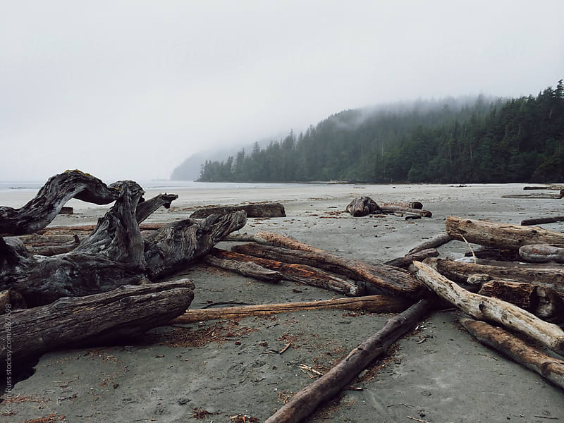 Driftwood on Moody Beach by Kevin Russ for Stocksy United