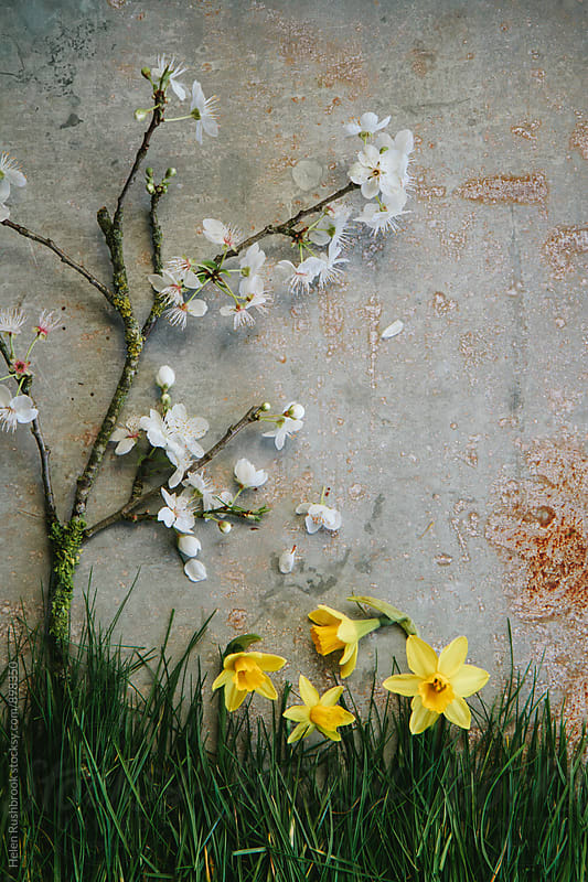 Blossom, daffodils and grass. Collage.  by Helen Rushbrook for Stocksy United