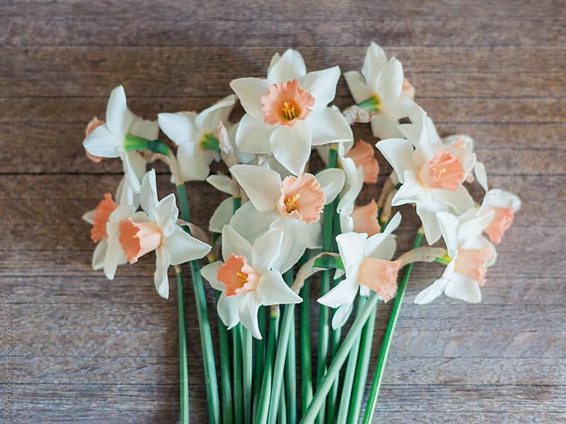 Spring Pink Charm Daffodil by Marta Locklear for Stocksy United