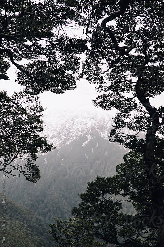 Mountains and beech trees, Arthur's Pass National Park, New Zealand. by Thomas Pickard Photography Ltd. for Stocksy United