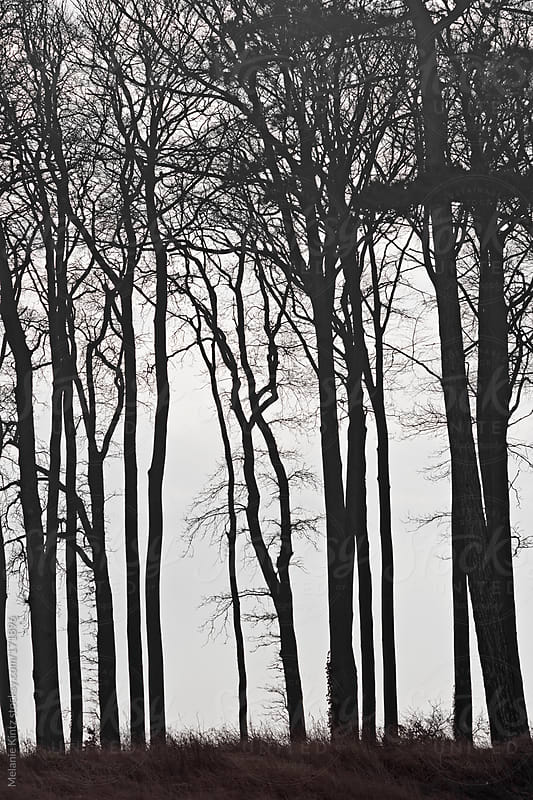 silhouettes of trees on the coast by Melanie Kintz for Stocksy United