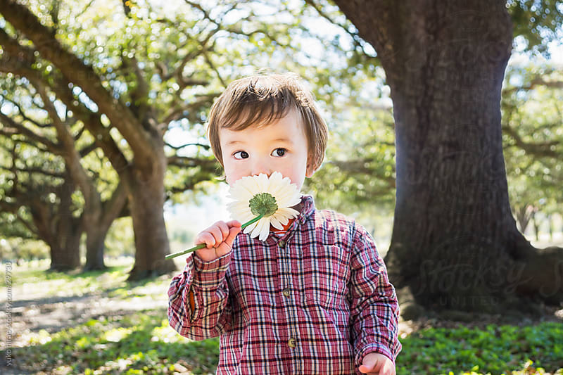 Curious little boy, smelling a flower at a park by yuko hirao for Stocksy United