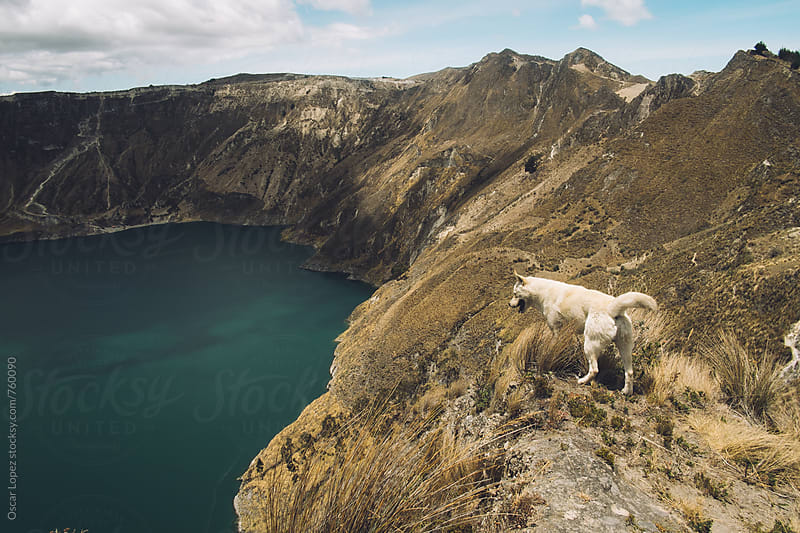 Dog Overlooking Crater Lake  by Oscar Lopez for Stocksy United
