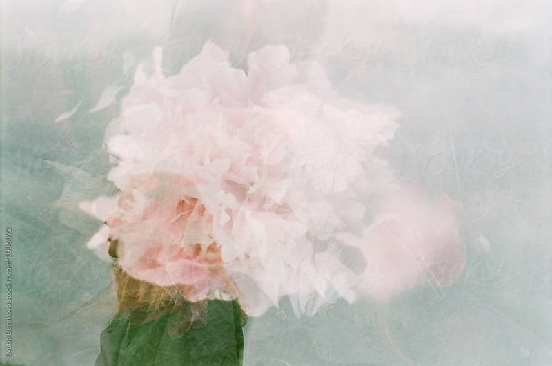 Multiply exposure shot of peony and woman's silhouette by Lyuba Burakova for Stocksy United