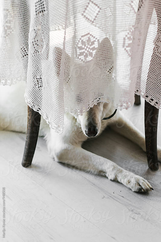 Dog under the table by Marija Kovac for Stocksy United