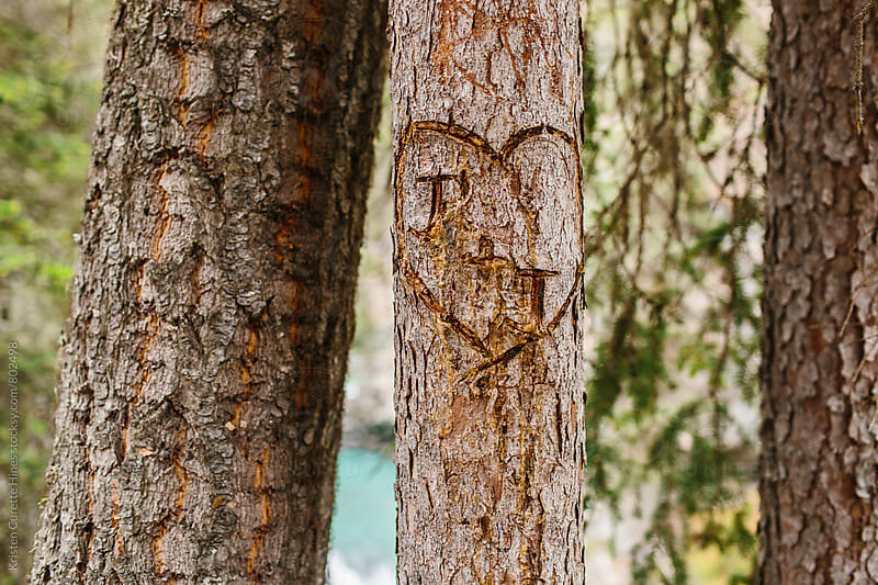 Heart carved in the bark of a tree by Kristen Curette Hines for Stocksy United