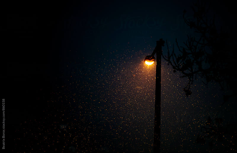 Snowflakes lit by a street lamp by Beatrix Boros for Stocksy United
