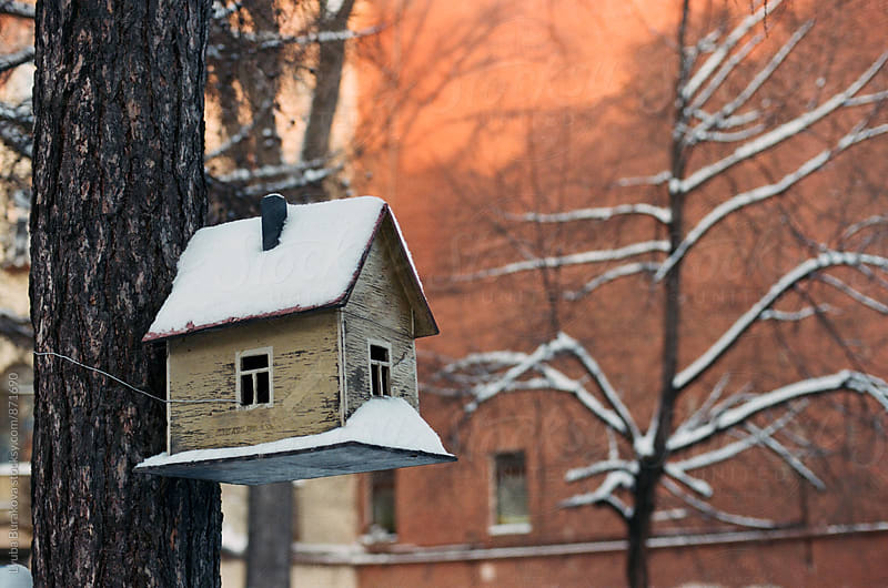 House for birds on tree by Liubov Burakova for Stocksy United