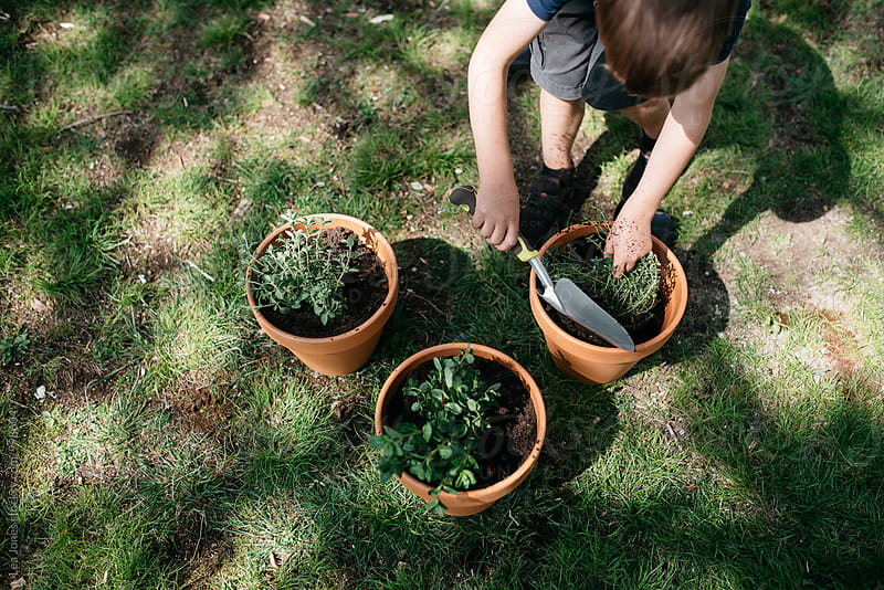 little child planting herbs in pots by Léa Jones for Stocksy United