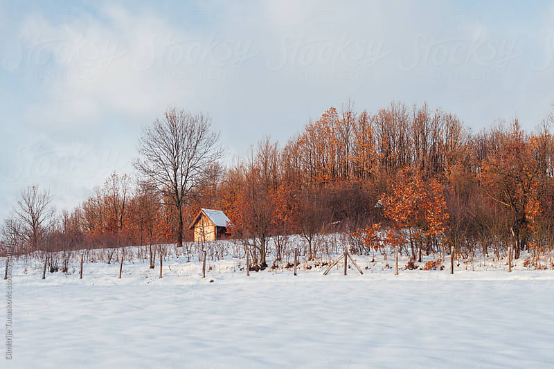 Small wooden cabin in the forest during the winter. by Dimitrije Tanaskovic for Stocksy United