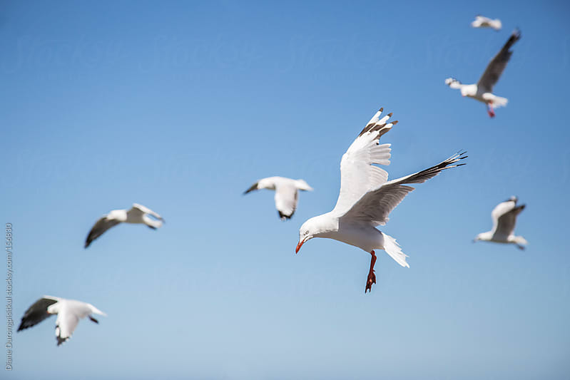 Seagulls in the sky by Diane Durongpisitkul for Stocksy United
