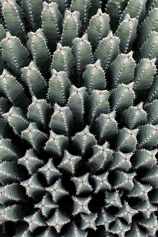 Cactus Patterns by Gary Parker for Stocksy United